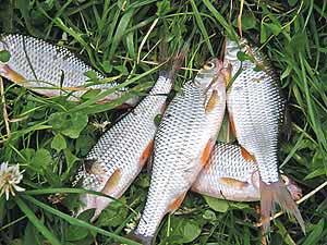 Рубцовчанка примет участие в Чемпионате мира по ловле рыбы